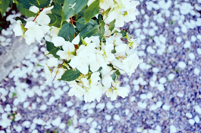kukiiii