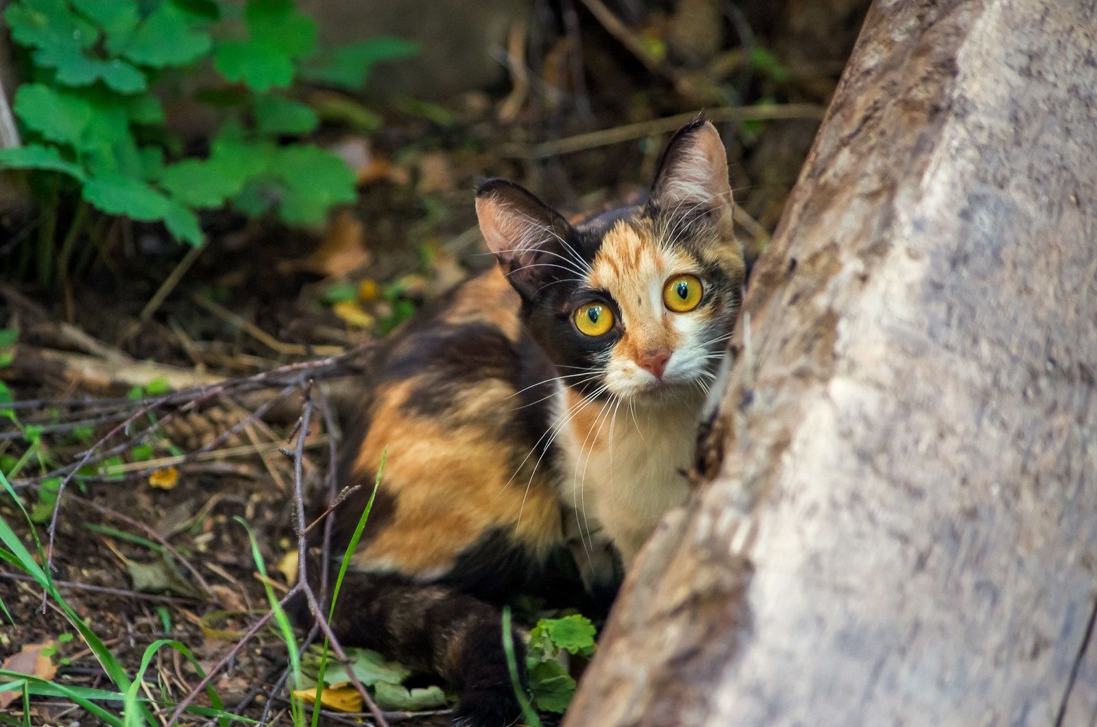 Дачный котик