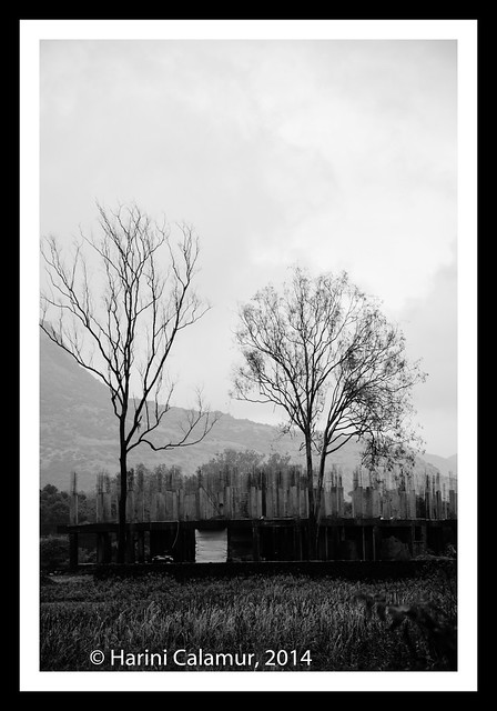 Lonavala - Two Trees bw (1 of 1)