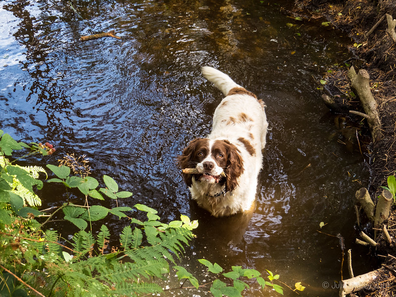 Max in the little pond on the old Coach Road