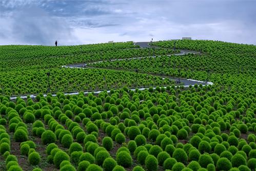 summer green rain japan umbrella landscape sony hitachi ibaraki nex hitachinaka kokia nex7 dheej18 djvillanueva desereejoyvillanueva sonynex7