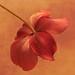 Fall Blossom