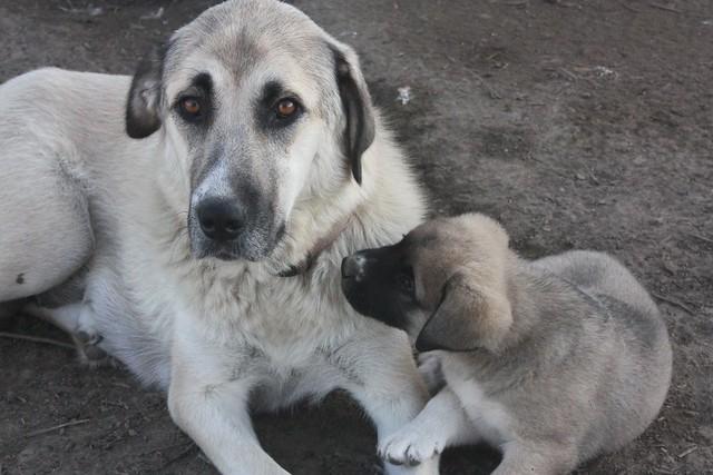puppy 5