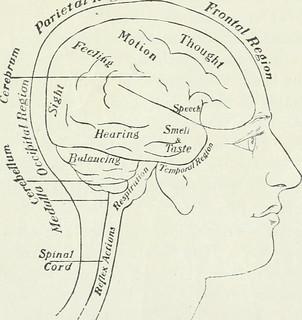AP-brain
