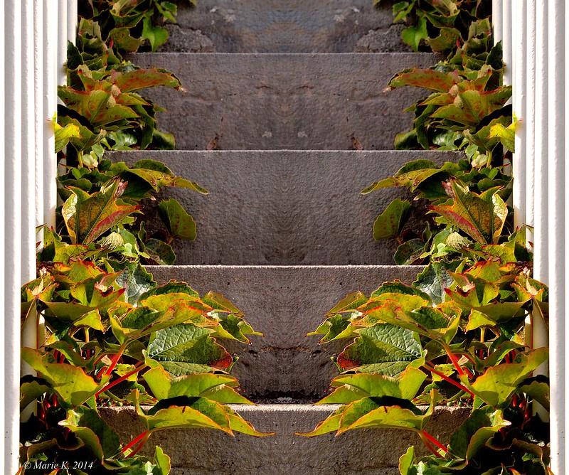Elle monte  l'escalier 15158542202_a652efcffa_c