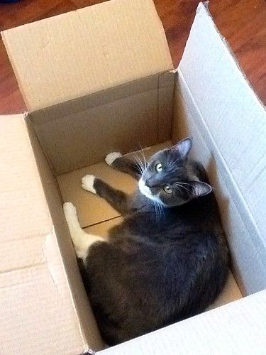 Crick in a box