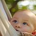 Baby harness gaze