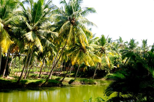 Kerala, Land of Coconut trees.