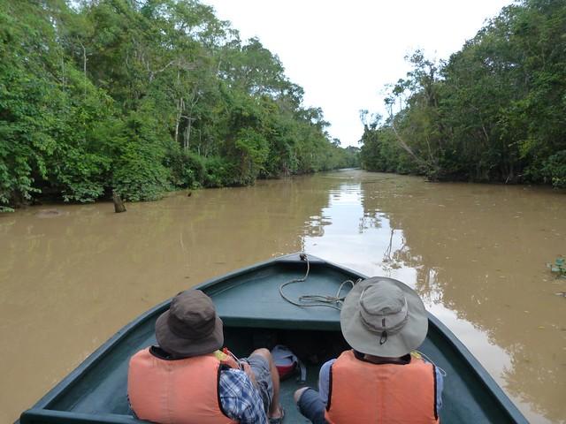 Safari en el río Kinabatangan (Borneo, Malasia)