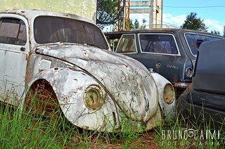 White abandoned Beetle