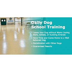 Training Camps We offer two types of training camps. Our Day Camp delivers intense command reinforcement training in your home while you are at work or out running errands, or you can drop your dog off for the day at our facility. Our Board & Train progra