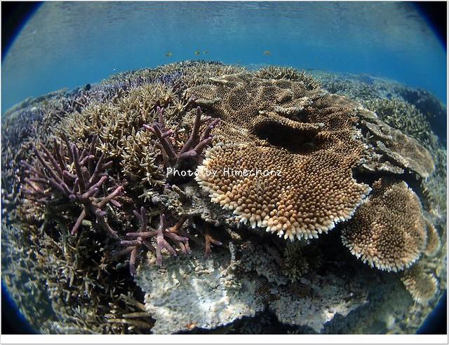 サンゴに見とれてしまいました!