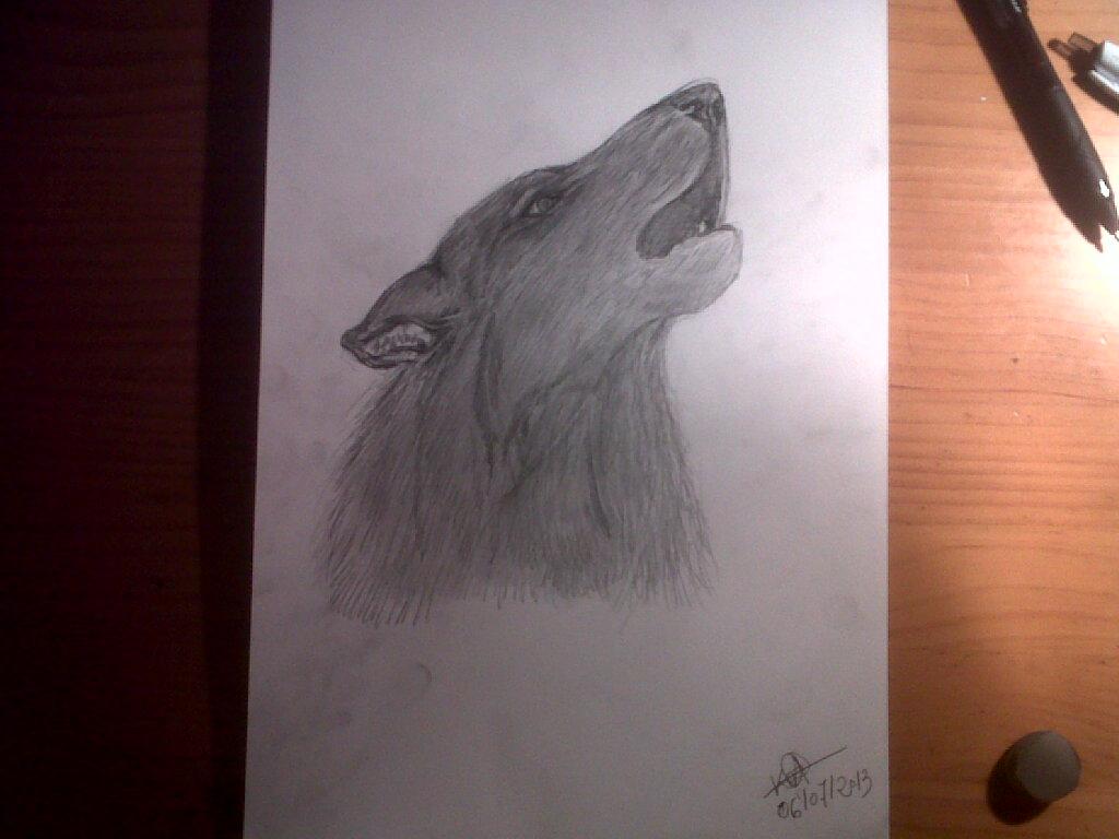 Lobo Aullando Dibujo A Lápiz Aulló Entonces El Lobo Pa Flickr