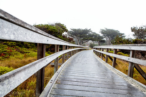 The Path to Asilomar