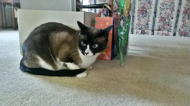 Pensive Bella says hi