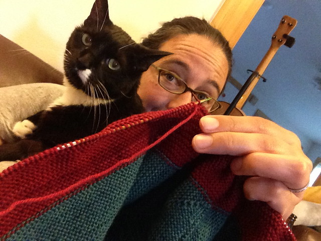 home knitting - with helper kitten