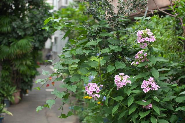 東京路地裏散歩 根津 2014年8月16日