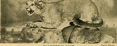 """Image from page 27 of """"California game """"marked down"""";"""" (1896)"""