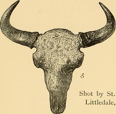 "Image from page 257 of ""Horn measurements and weights of the great game of the world: being a record for the use of sportsmen and naturalists"" (1892)"