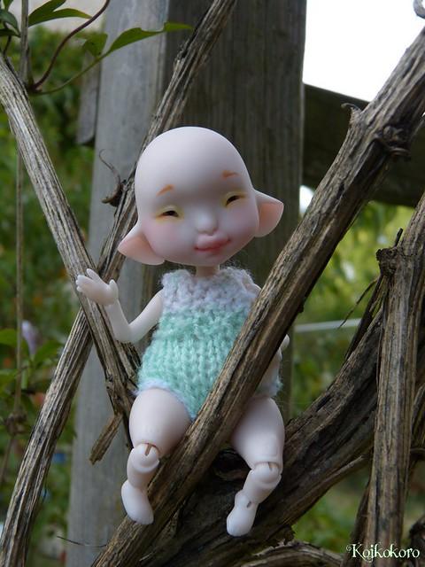Les tinies de Koikokoro~photos en vrac - Page 5 14877578927_3636dff590_z