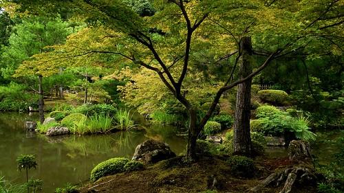 japan traditional zen 京都 日本 寺院 kioto albero 寺 japon baum giappone templo tempel giapponese japonés japanesetemple 寺廟 等持院 侘寂 toujiin albol