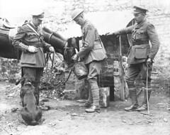 Officers of the 22nd (French Canadian) Battalion watering a horse / Des officiers du 22e Bataillon (canadien français) donnent à boire à un cheval