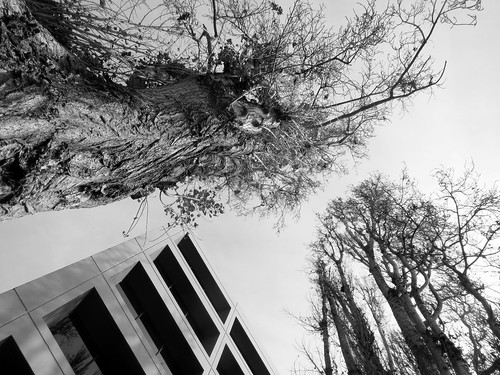 Angle of Trees and Building