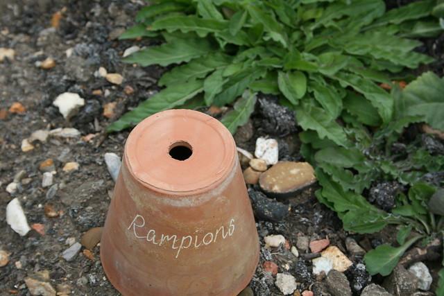 Rampions