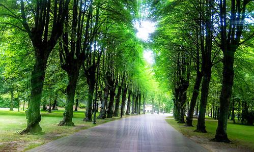 street city sky sunlight tree green clouds forest garden latvia sunnyday liepaja kurzeme sunshing kurzemesplanosanasregiona kurzemesturismaasociacija liepajatownstreet