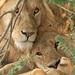 Serengeti Day 1