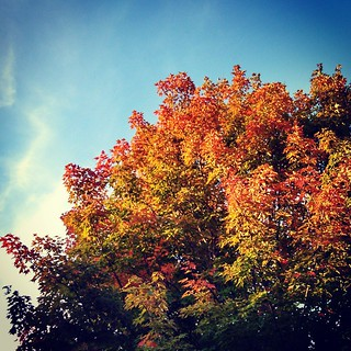 Happiness is... Lazy #fall Sundays! #foliage #newengland #NothingBetter
