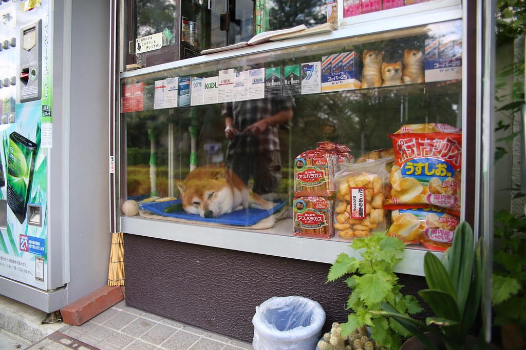 IMG_8471 武藏小金井 鈴木タバコ店  Photo by Toomore
