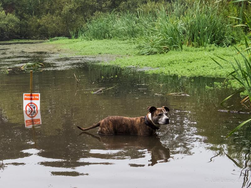 Jez in the lake