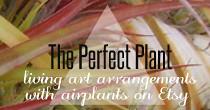 perfectplant