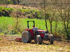 �guas Frias (Chaves) - ...lavrando a terra ...
