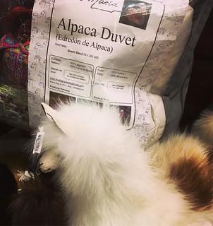 Alpaca duvet #edredon #duvet #alpaca #llama #peru