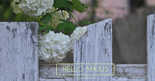 hello_majus2017