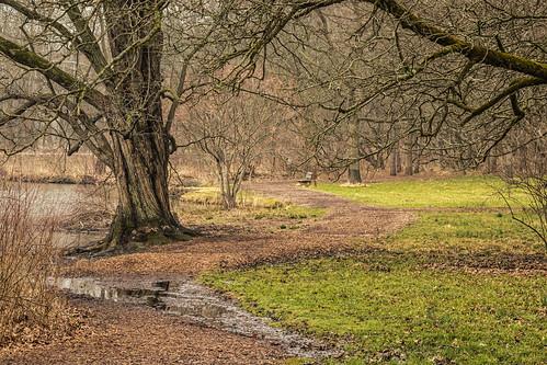 2017 landscape march mortonarboretum spring woods