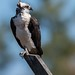 Osprey of Oceanport | 2017 - 1