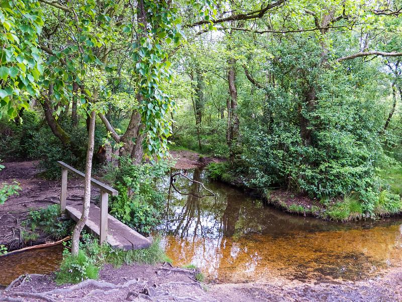 Stream, Burton Common