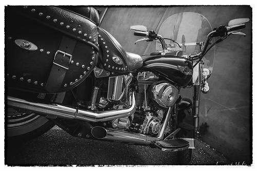Harley Davidson Softail