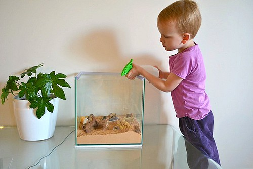Caring for a Hermit Crab (Photo from How We Montessori)
