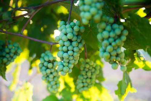 Grapevine Wine Tours-17.jpg