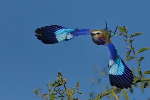 Swoosh! (Explore 16 June 2014)