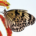 Paper kite. by Bernard Spragg