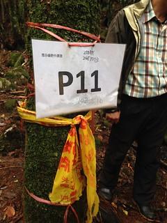 國家森林遊樂區自然成長的樹木,被貼上標號。
