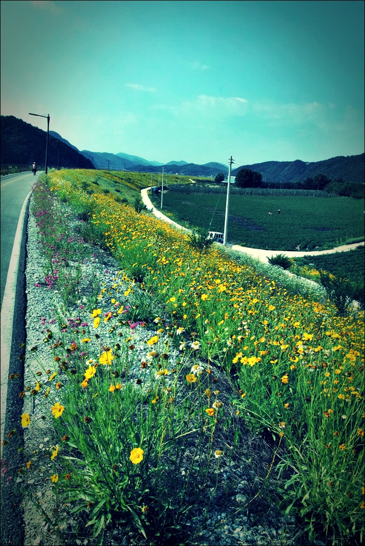 만발한 꽃-'남한강 자전거 종주 Bike Riding Namhan river Korea'