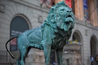 A Lion Roaming Michigan Avenue