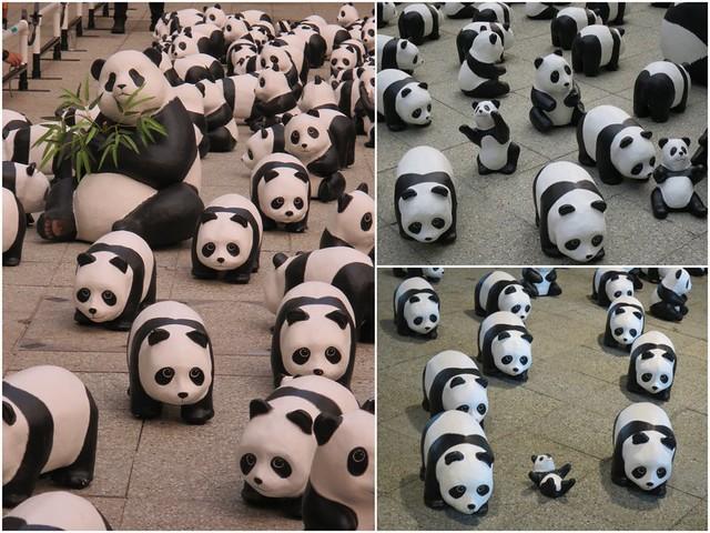 1600 pandas2