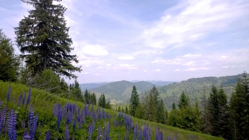 landscape. Trostyan, Carpathians, Ukraine